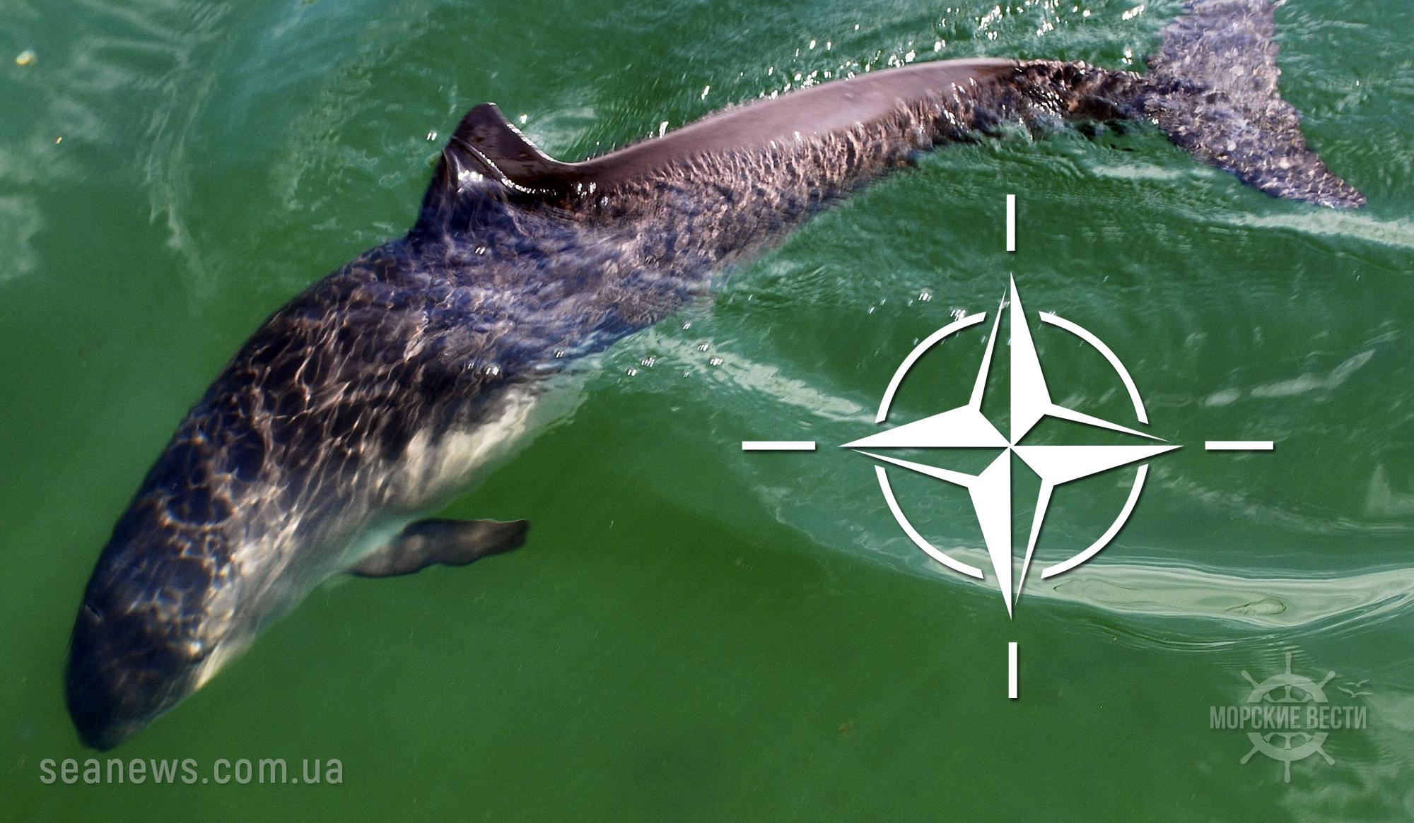 НАТО обвинили в массовом уничтожении морских свиней